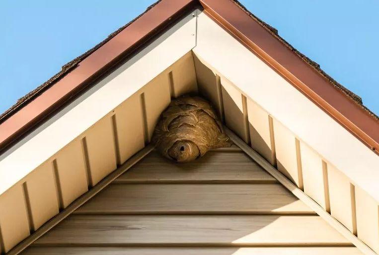 Jak pozbyć się bezpiecznie gniazda os?